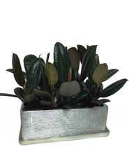 Rubber in Silver planter